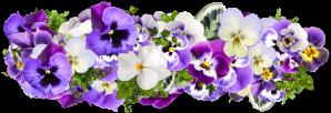 flowers-2058090_1920